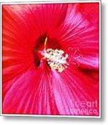 Sandy's Flower Metal Print