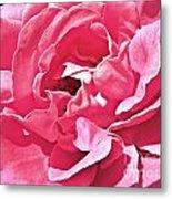 Sandys Pink Rose Frills Metal Print
