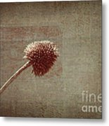 Sans Nom - S03p11t05 Metal Print by Variance Collections