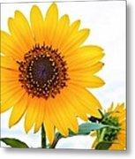 Sassy Sunflower Metal Print