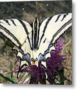 Scarce Swallowtail Metal Print