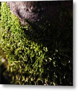 Scarf Of Green Metal Print
