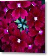 Scarlet Bouquet  Metal Print