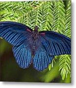 Scarlet Swallowtail Metal Print by Joann Vitali