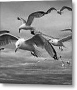 Sea Gull Scavengers Metal Print