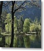 Scenic View Of The Merced River Metal Print