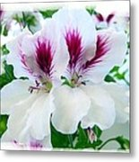Scented Geraniums 2 Metal Print