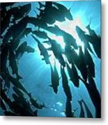 School Of Fishes Metal Print
