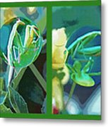 Science Class Diptych - Praying Mantis Metal Print by Steve Ohlsen