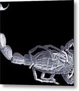Scorpion, Sem Metal Print