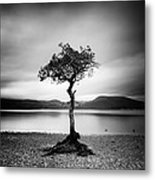 Scotland Milarrochy Tree Metal Print by Nina Papiorek