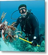 Scuba Diver With Spear Of Invasive Metal Print