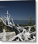 Sculpture By Mother Nature Metal Print