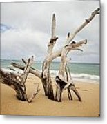 Sculptures By The Sea Metal Print