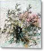 Sea Cucumber And Starfish Metal Print