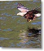 Sea Eagle's Water Landing Metal Print