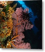 Sea Fans And Crinoid, Fiji Metal Print