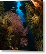 Sea Fans, Fiji Metal Print