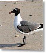 Sea Gull Posing For The Camera Metal Print