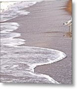 Sea Gull Reflection Metal Print by Cindy Lee Longhini