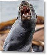 Sea Lion Agony Metal Print