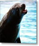 Sea-lion Metal Print