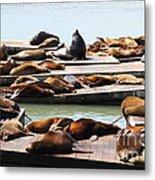 Sea Lions At Pier 39 San Francisco California . 7d14316 Metal Print