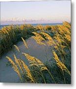 Sea Oats, Dunes, And Beach At Oregon Metal Print