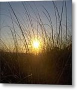 Sea Oats In The Sunset Metal Print