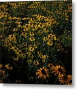 Sea Of Black-eyed Susans Metal Print