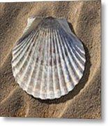 Sea Shell 2 Metal Print