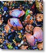 Sea Shells Sea Life Metal Print