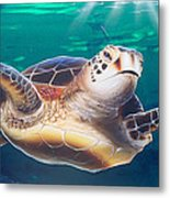 Sea Turtle Metal Print by Mike Royal
