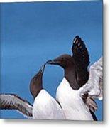 Seabird Love Metal Print