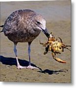 Seafood For Lunch Metal Print