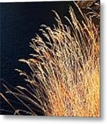 Seagrass In Gold Metal Print