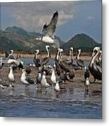 Seagul Fly By Metal Print
