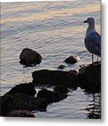 Seagull At Dusk Metal Print