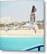 Seagull Flying Metal Print