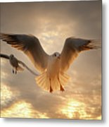 Seagull Metal Print by GilG Photographie