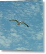 Seagull In Sky Metal Print