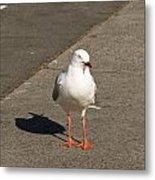 Seagull In The Summer Sun Metal Print by Ulrich Schade