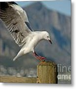 Seagull Landing On Pole Metal Print
