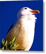 Seagull On Top Metal Print by Catherine Natalia  Roche
