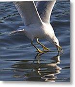 Seagull On Water Metal Print