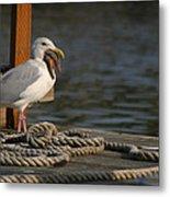 Seagull Swallows Starfish Metal Print