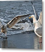 Seagull Treasures Metal Print