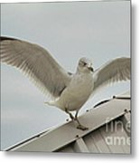 Seagull With Character Metal Print