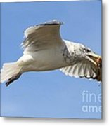 Seagull With Snail Metal Print