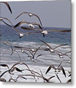 Seagulls Fly Over Surf Metal Print